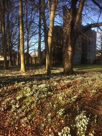 Snowdrops in the Ingram churchyard