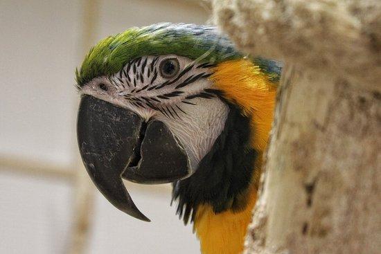 Papugarnia Karpacz