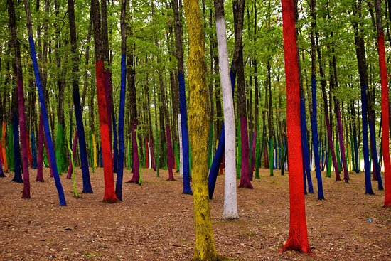 ‪‪Bumbesti Pitic‬, رومانيا: The colored forest of Romania, a project created to raise awareness about the illegal deforestations having place throughout the country.‬