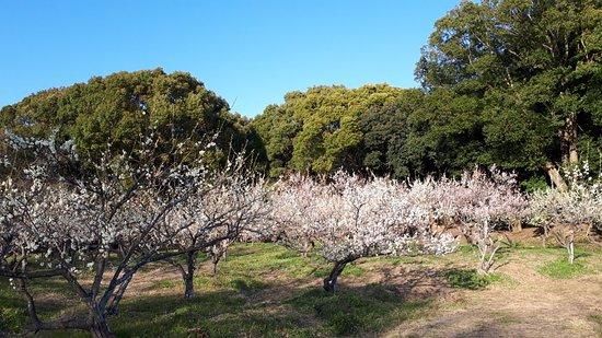 Souri Midori to Hana no Fureai Park