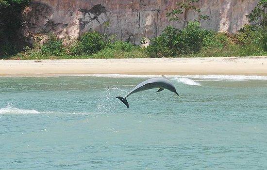 Baía dos Golfinhos