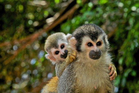 Mangrove Monkey Tour