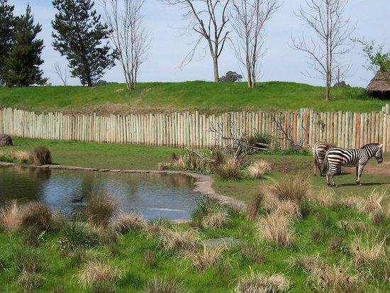 Spring over linjen: Temaiken Biopark Admission Ticket: Zebras africanas