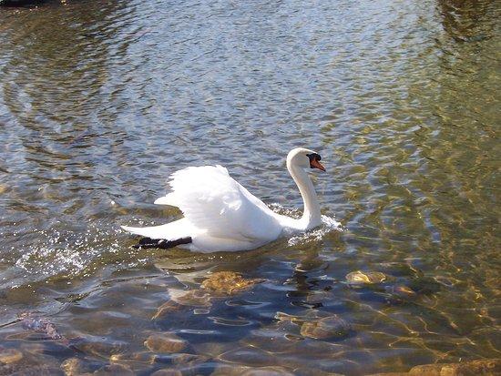 Spring over linjen: Temaiken Biopark Admission Ticket: Infaltables los cisnes en los lagos