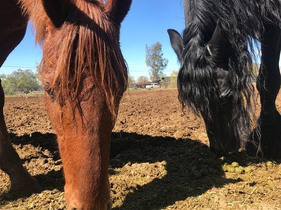 Trailhead Ranch