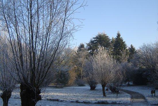 Arboretum Heempark: Winter in Heempark Delft