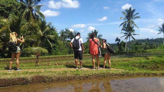 Buleleng District, Indonésie : Explore the real natural area,nort Bali.Lemukih Village