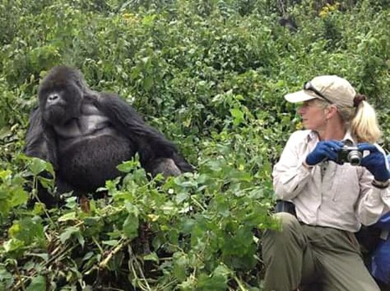 Gorilla tracking in the remote forests in Bwindi impenetrable National park