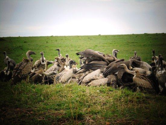 Vultures in Masai Mara