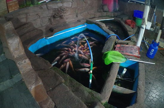 Bale Ayu Resto: Live Fishes in the Tank