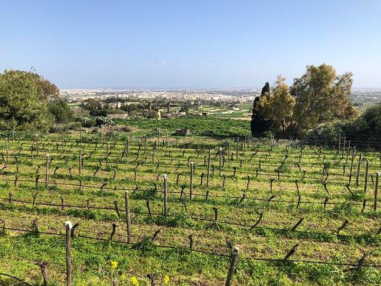 Malta Essen und Wein Tour mit Besuch der lokalen Farm - gemeinsame Tour Foto