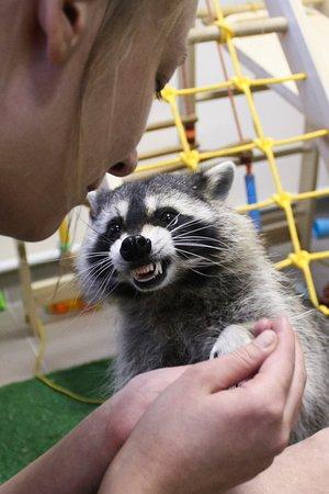 Видали, какие у меня Зубы?