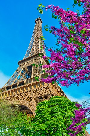 Celebrate life in full bloom and the smell of spring beneath the shade of the iconic Eiffel Tower. Plan a Parisian getaway today by tapping the link in our intro!