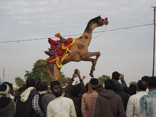 Smart India Tours: Camel dancing, cattle fair, Nagaur