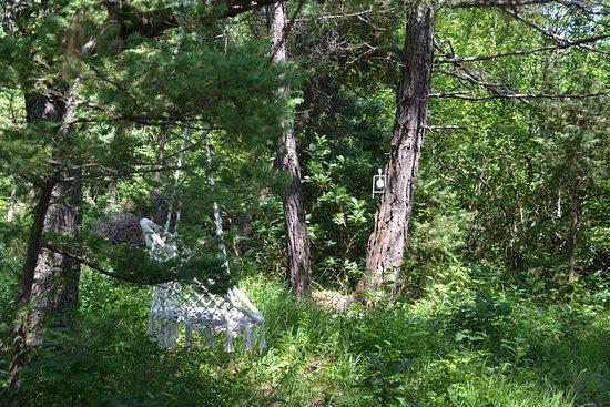 Altai: Подвесное кресло-гамак в лесу
