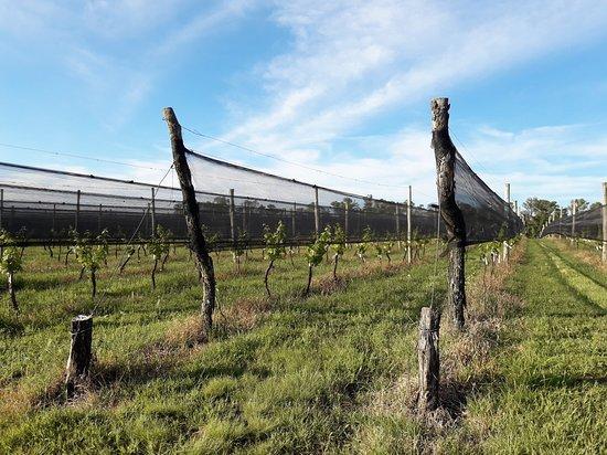 Familia Furfaro: Recorriendo el viñedo se aprende acerca de esta actividad ancestral
