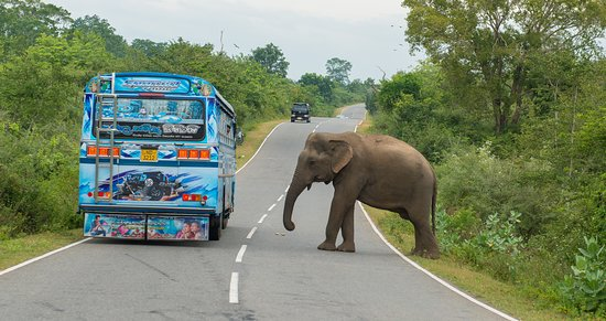 elephants asking for treats