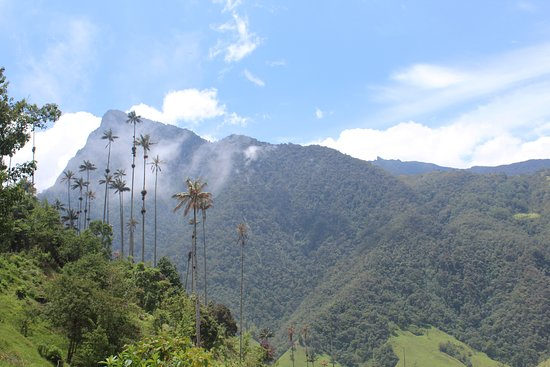 I am Colombiano: Witness the tallest palms trees in the world.