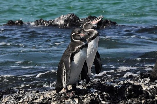 6-Day All Inclusive Galapagos Island...