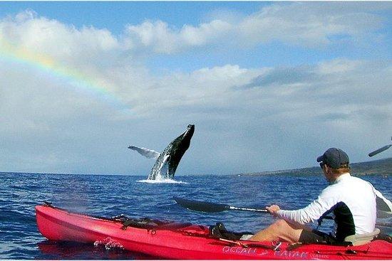 皮划艇鲸鱼表和龟礁浮潜