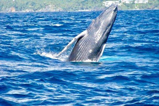 From Punta Cana: Famous Whale Samana...