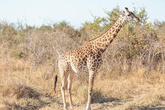 23-Day Kruger Victoria Falls and...