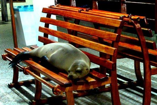 4 Días Tour Galápagos - Isla Santa...