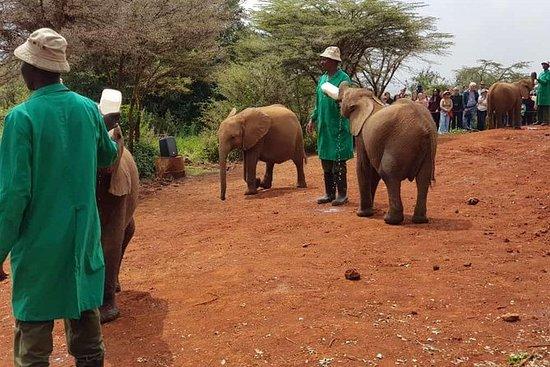David Sheldrick Elephant Orphanage...