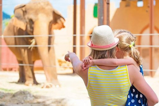 Full-Day Tour Athens Attica Zoo and...