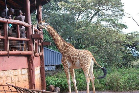 Giraffe center breathtaking Tour