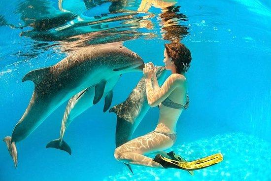 Dolphin Swimming, Ile aux Benitier ...