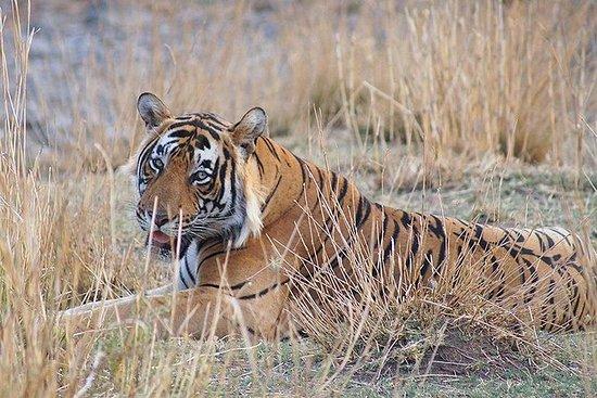 3N / 4D Safari Tour i Ranthambore...