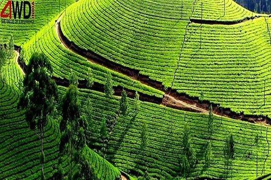 Uma semana feliz em Kerala Tour