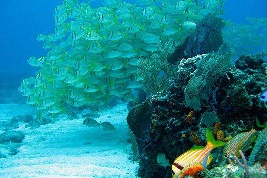 Tour Snorkeling di Puerto Morelos con
