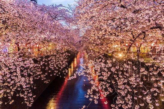 Kirsebærblomst, kveldsmat og...