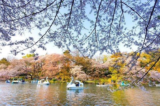 Tradisjonell 'Hanami' Cherry Blossom...