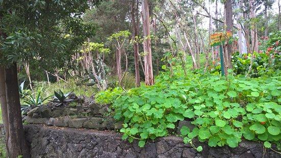 Bosque de Tlalpan