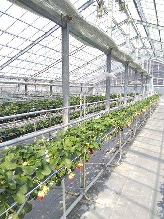 Takanashi Farm