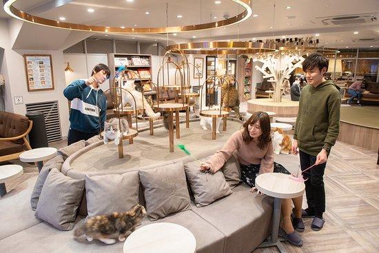 Cat Cafe Mocha Shibuya Koendori