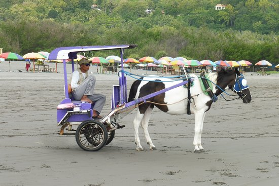 Horse Carriage for rental