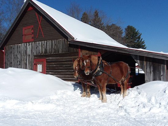 Brantwood, WI: Skiing, sledding, snowshoeing, skating, sleigh rides and a sauna... Palmquist's Farm has it all!