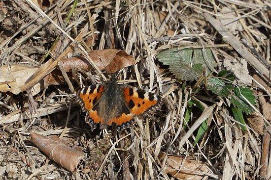 Malans, สวิตเซอร์แลนด์: Erste Schmetterlinge sind schon unterwegs