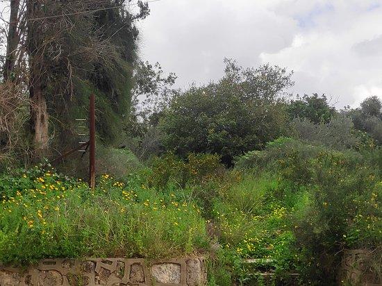 אזור המרכז, ישראל: נוף ארץ ישראלי בזמן החורף בשבילי קיבוץ נצר סרני