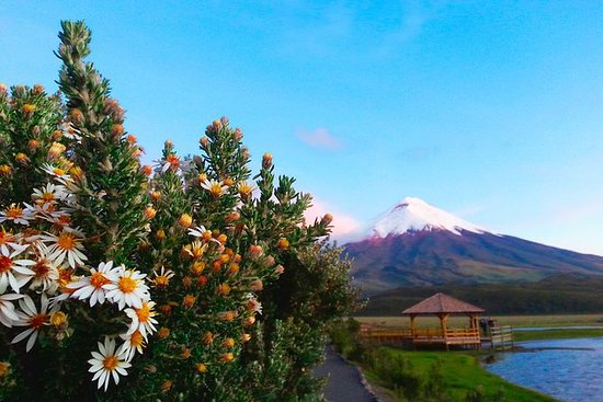 Cotopaxi full day tour from Quito...