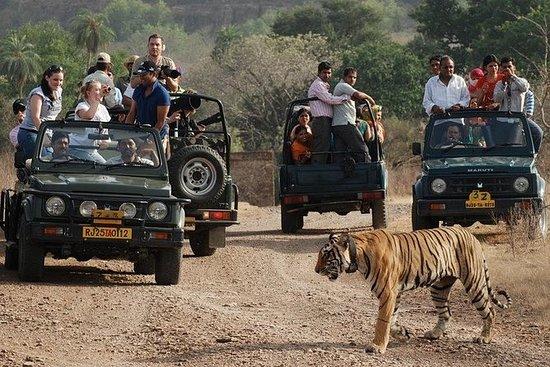 Delhi Agra Jaipur Tour med...