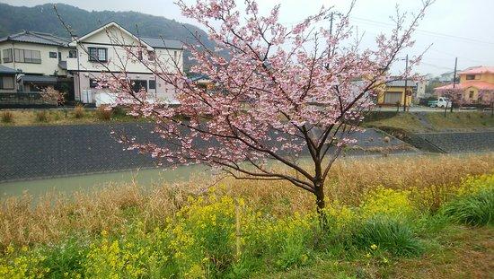 Kyonan-machi Photo