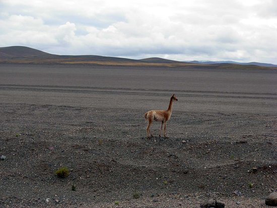 Susques, Argentina: По дороге