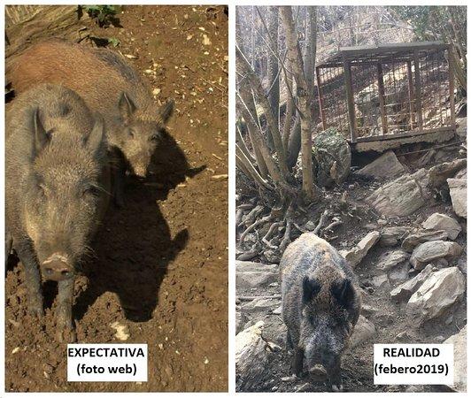 Mollo, Spain: Decepción. Animales y sus espacios poco cuidados.