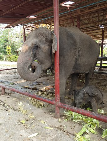 Royal Elephant Kraal Village