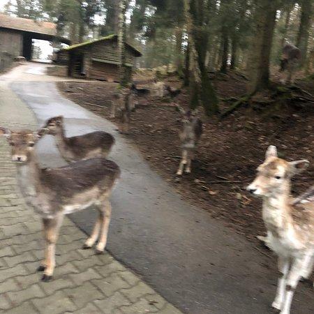 Ausflugspark am Steinbruchsee